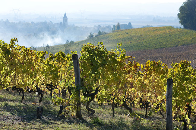 Crozes-Hermitage vineyards in the Northern Rhône.
