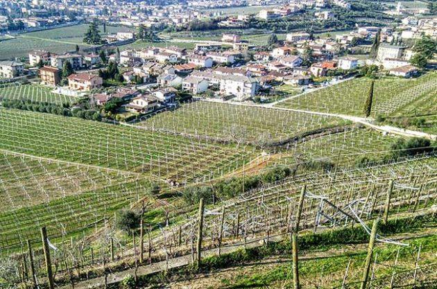 Valpolicella Quintarelli vineyards