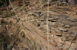 schist vineyard, terroir