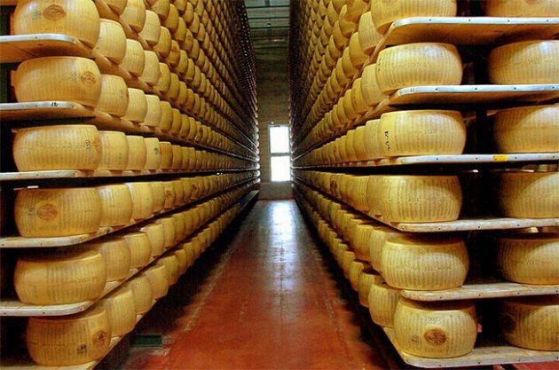 Wheels of Parmigiano Reggiano in a factory in Italy