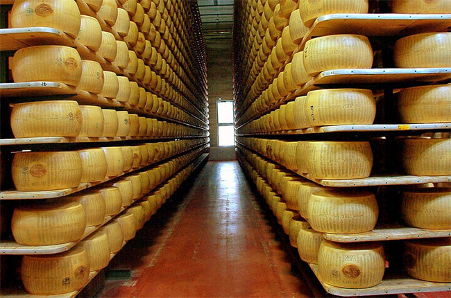 Wheels of Parmigiano Reggiano in a factory in Italy