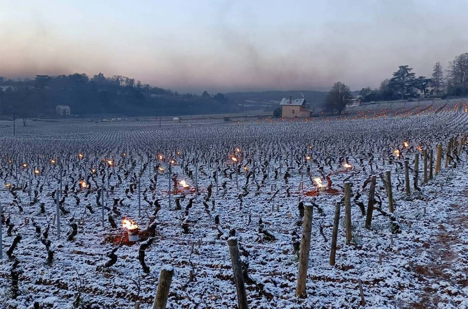 Candles lit to combat frost in a vineyard in Burgundy