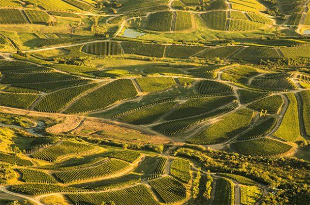 Vineyards in Uruguay
