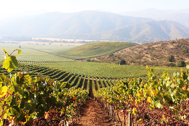 La Niña brings hot and early 2017 harvest for Chile - Decanter
