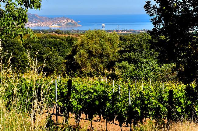 Corsica wineries