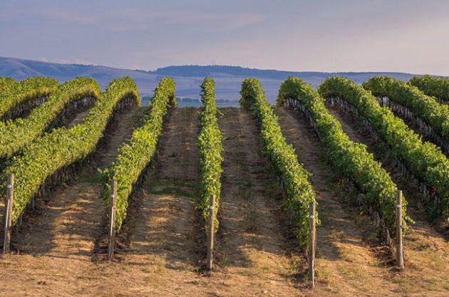 Washington State wineries, Gramercy Cellars
