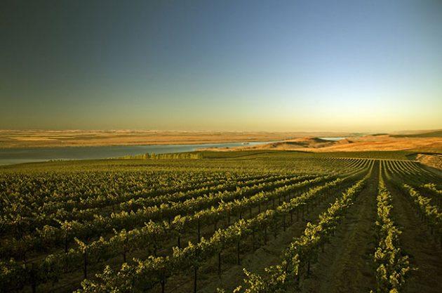 Washington State wineries to visit