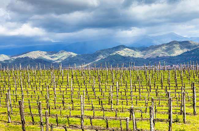 mount etna vines