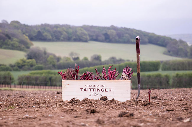 taittinger kent, domaine evremond