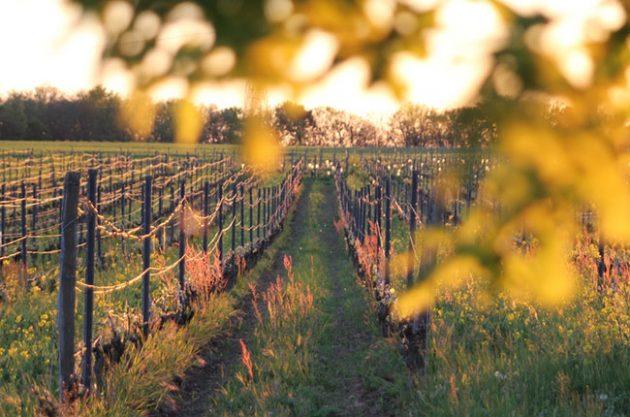 Toulouse wine tour, Domaine Rotier