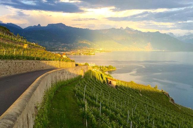 Lake Geneva wineries