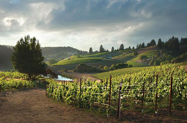 Santa Cruz Mountains producers