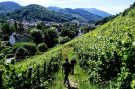 alsace grand cru, rangen de thann