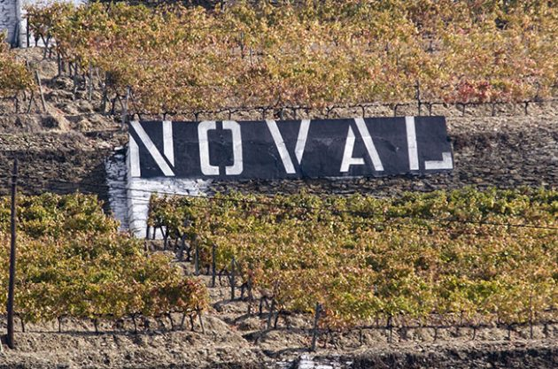 Quinta do Noval vines.