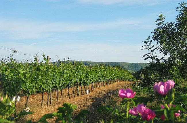 English wine turnover, Ridgeview