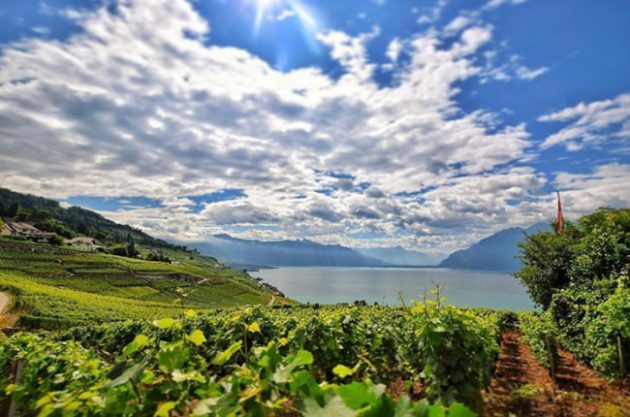 Lake Geneva wine