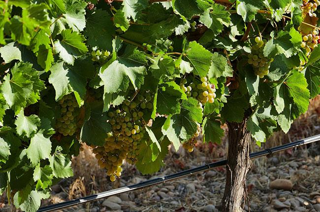 Rueda wine facts,