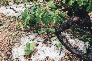 beaujolais hail