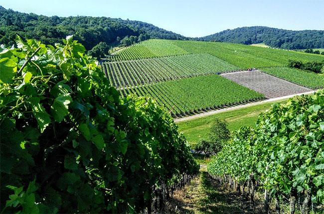Castell, Franconia wines.