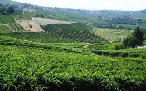 barbaresco, langhe wines