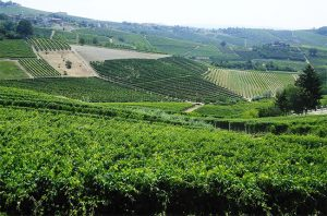 barbaresco, langhe wines