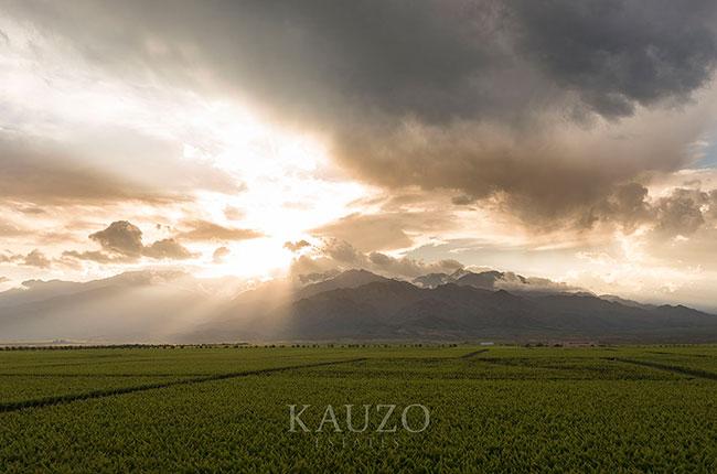 Kauzo