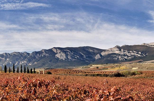 rioja single vineyard, rioja alta