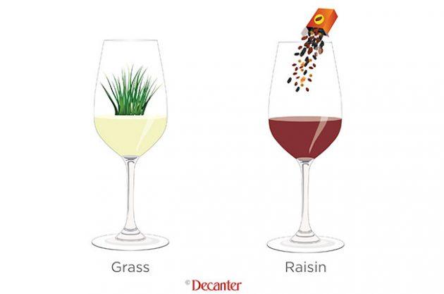 wine tastes of grass, tasting notes