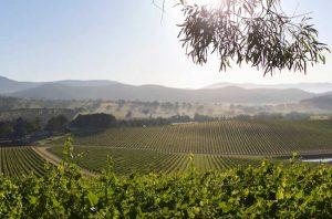 De Bortoli Dixons Creek vineyard