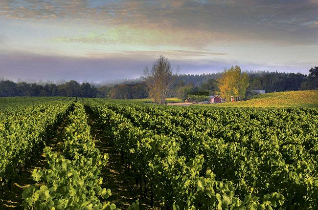 Ramney vineyard