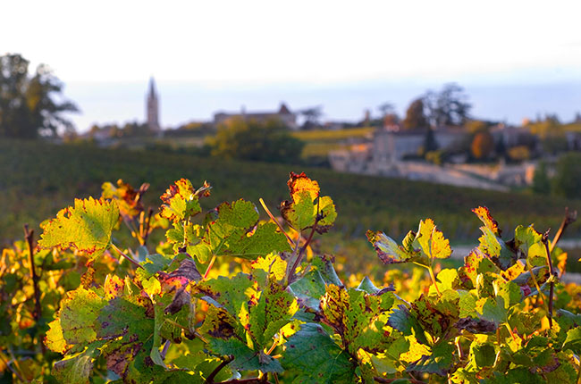 Bordeaux Right Bank 2015 wines
