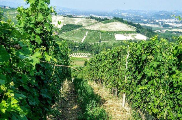 gaja vineyards