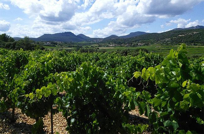 Montpeyroux in Languedoc.
