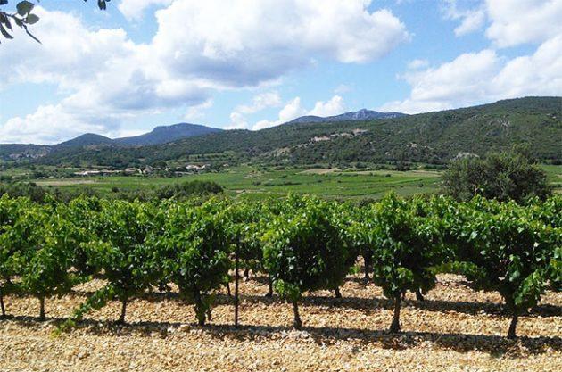 montpeyroux, languedoc, wine