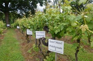 Pédebernade vineyard, tardif