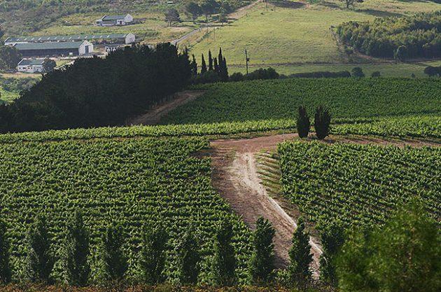 Hemel-en-aarde wineries, Hamilton