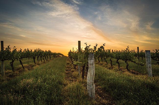 Aussie Chardonnay
