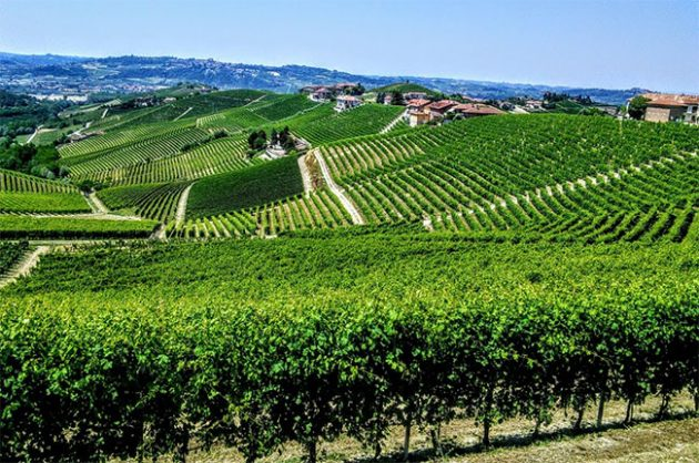 Barbaresco wine: first among equals