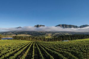 hemel-en-aarde wineries