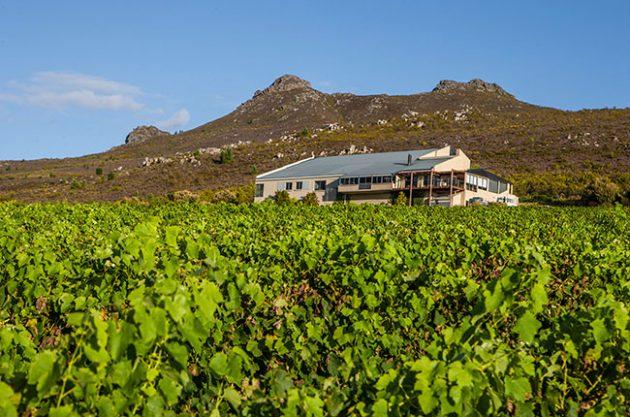 hemel-en-aarde wineries, Newton Johnson