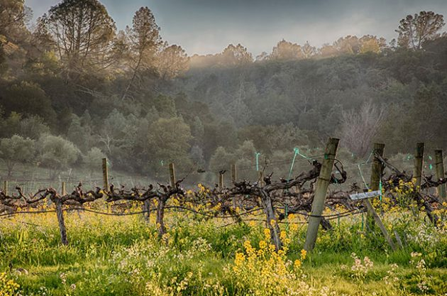 sustainable california