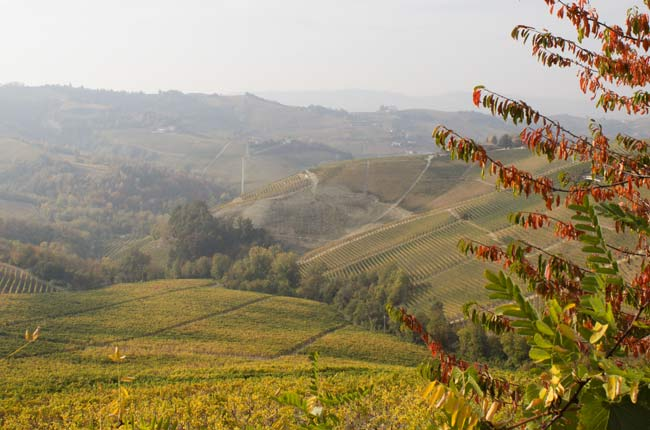 Barolo 2014 preview