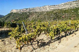 priorat white wine, mas alta
