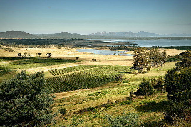 tasmania vineyards