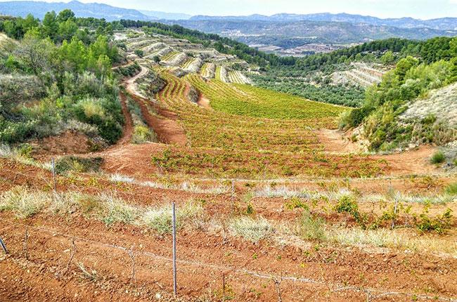 montsant wines, vineyard