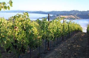Buying a vineyard