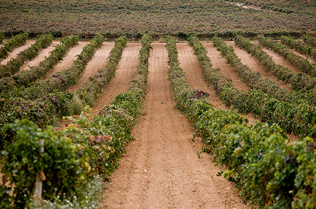 Spanish wine regions to discover