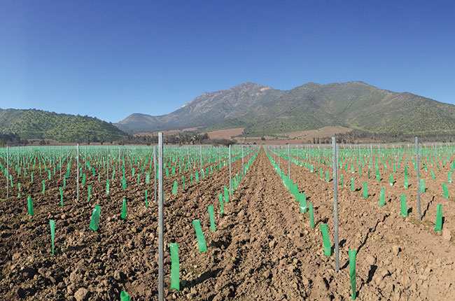 Santa Rita Chile: New plantings alluvial vineyard terraces
