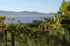 Spanish wine regions visit