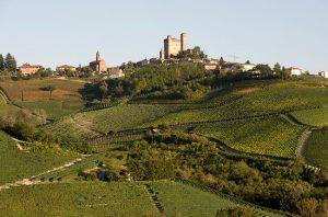 Vietti vineyards